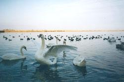 Υδροβιότοπος Μουστού